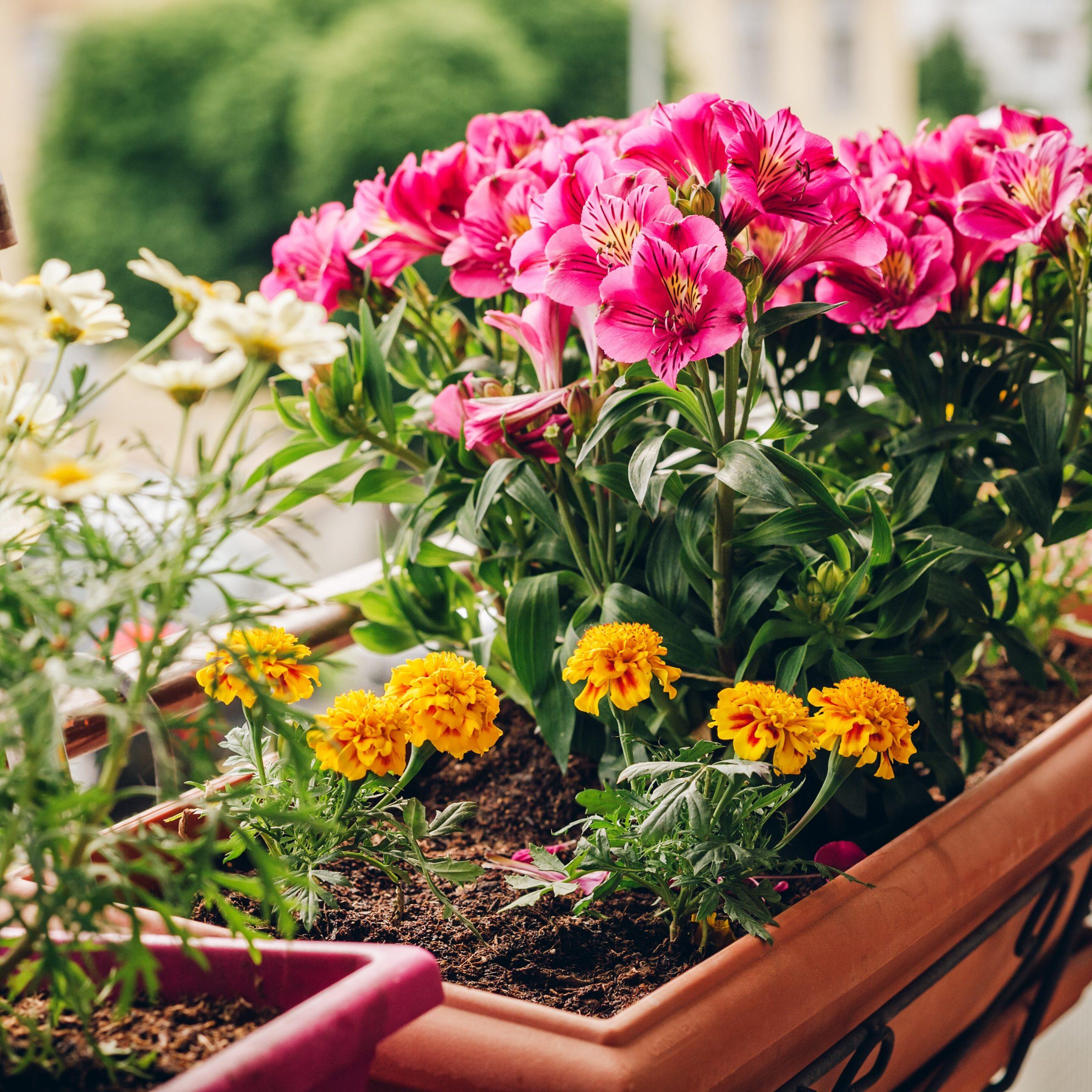 Blumen machen Freude - ob als Geschenk oder auf dem eigenen Balkon und im Garten