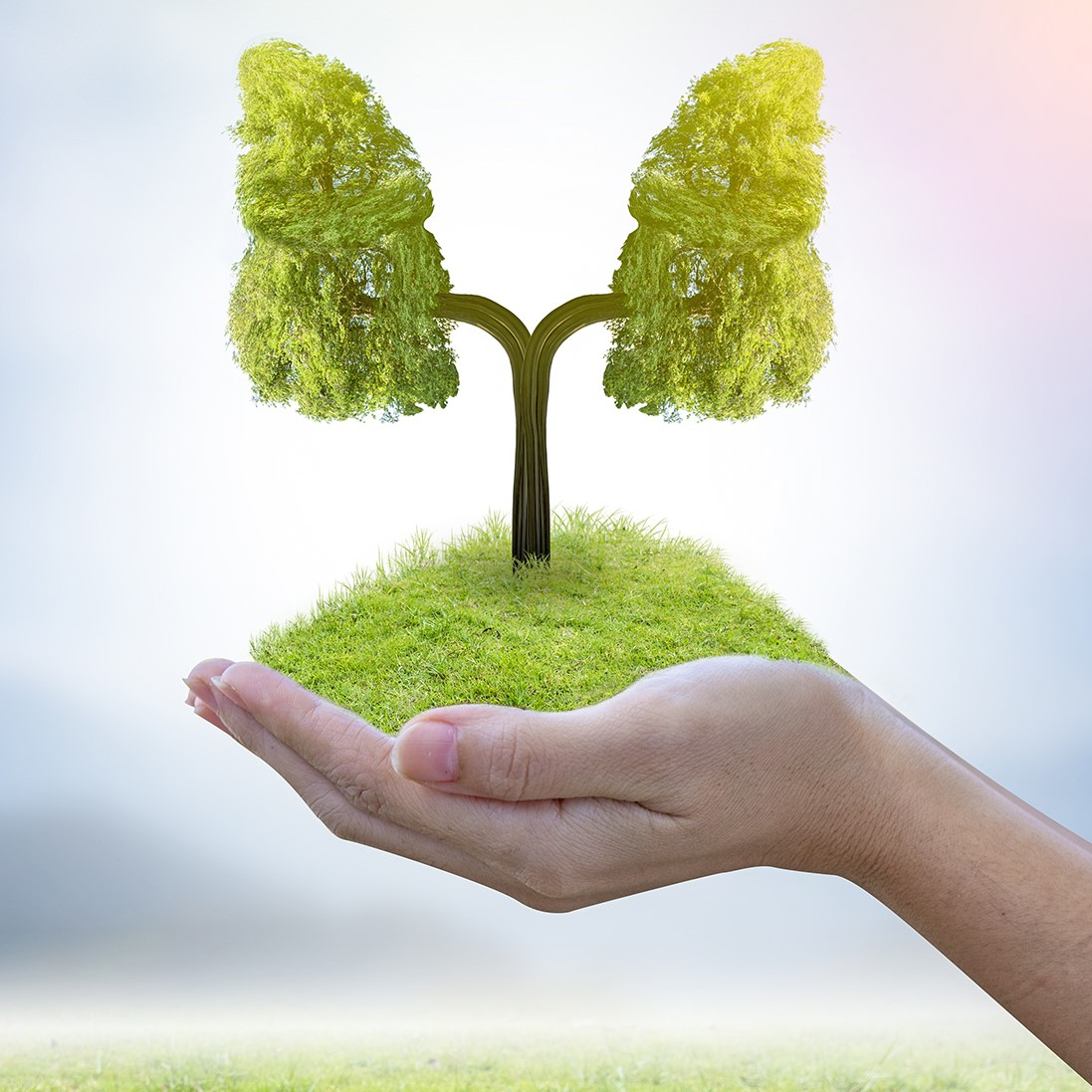 Baum in Form einer Lunge