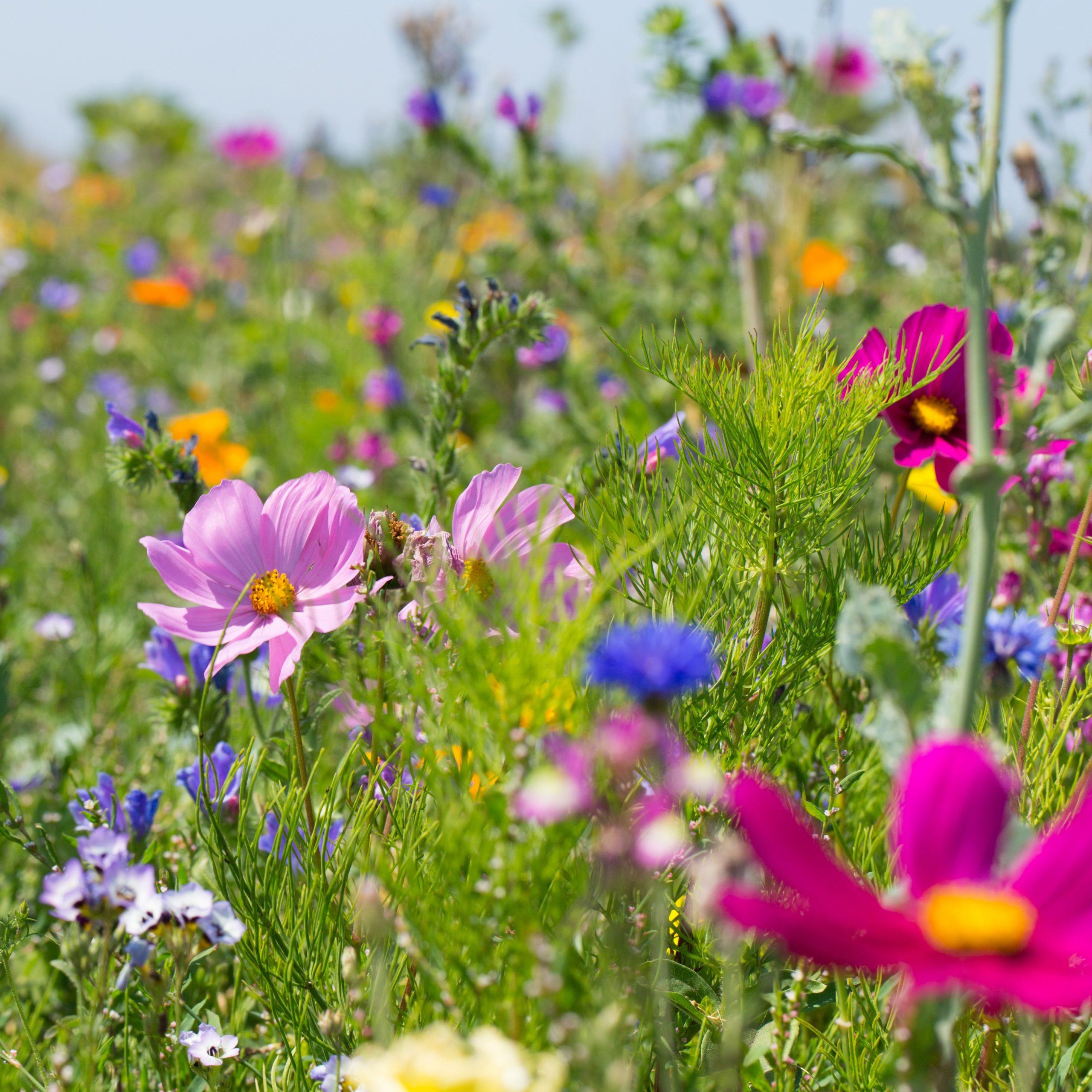 Die App Flora Incognita erleichtert die Bestimmung von Pflanzenarten