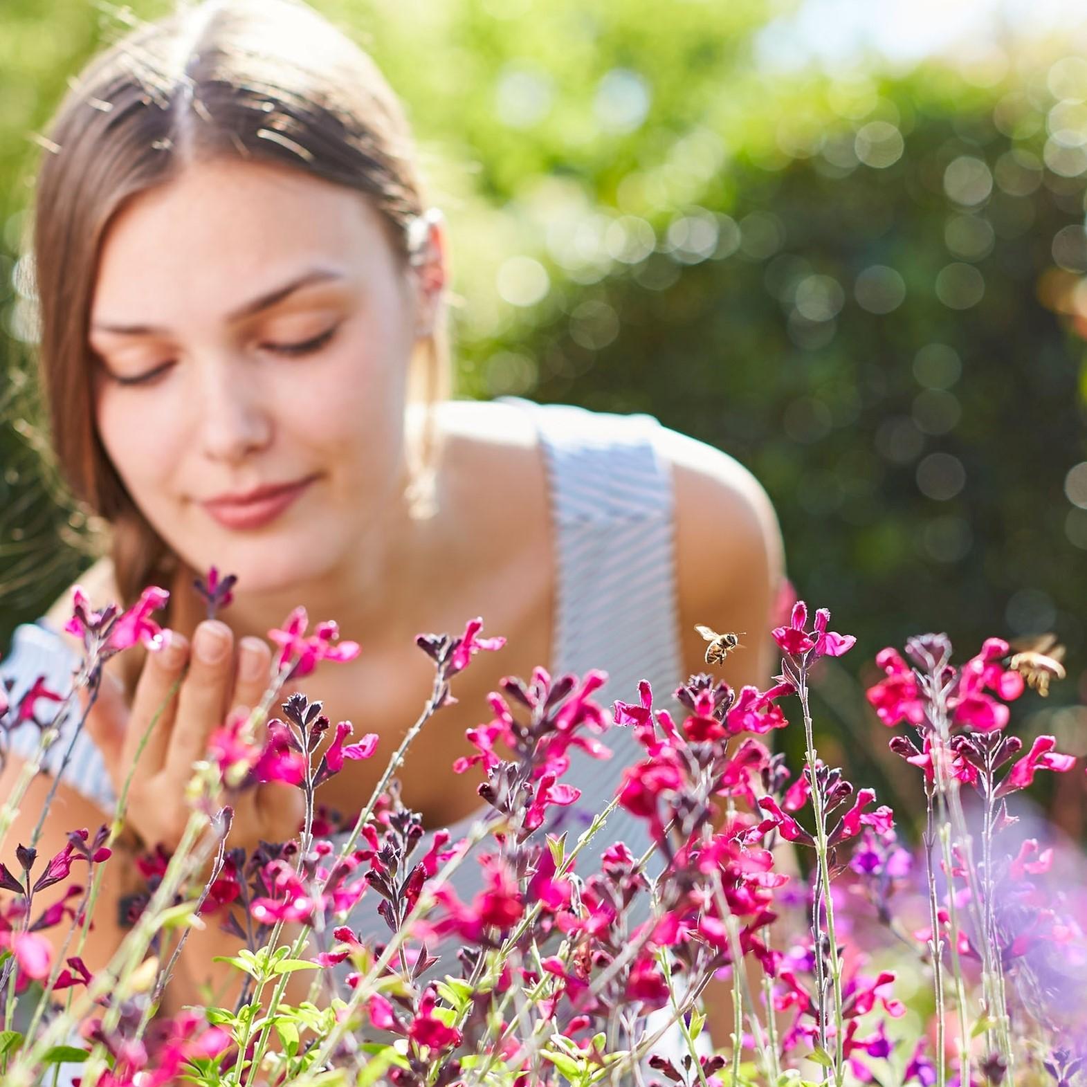 Ein Genuss, der gerade jetzt so wichtig ist: Beet- und Balkonpflanzen bringen mit ihren leuchtenden Farben Freude in die Welt – und versorgen Insekten mit lebenswichtigem Nektar und Pollen.