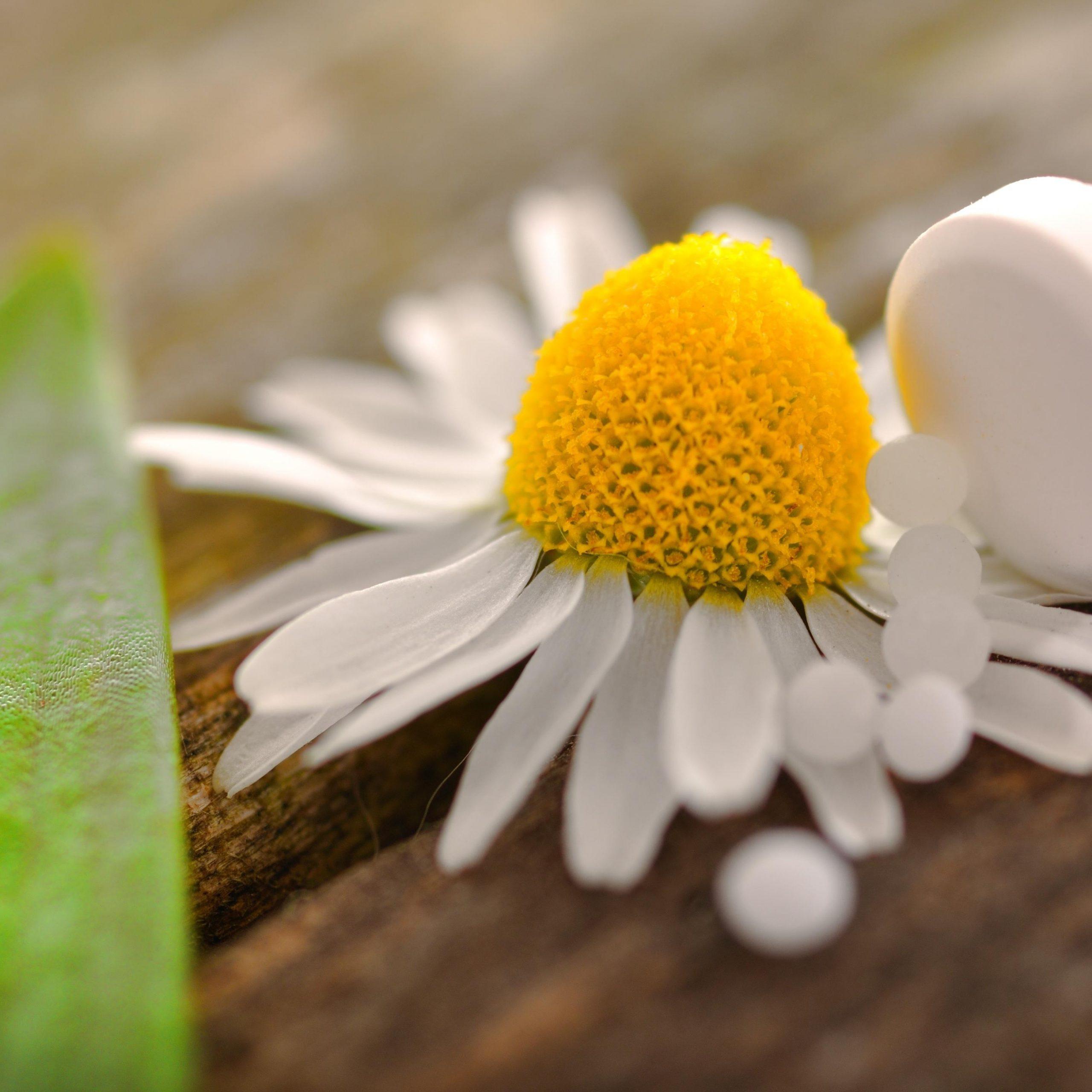nter dhu-fachkreise.de finden Heilpraktiker einen eigenen umfassenden Wissensbereich rund um die Homöopathie und Schüßler-Salze