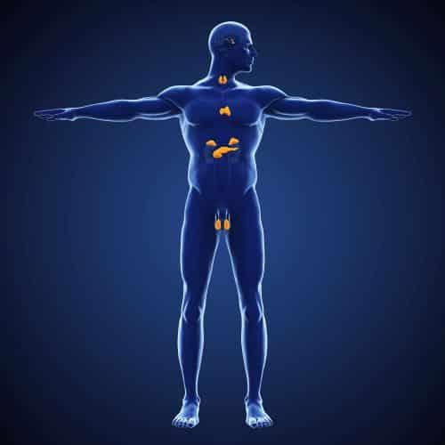 Das Hormonsystem kann unseren ganzen Organismus beeinflussen. Seine Komplexität bringen jüngst auch wieder neue Forschungsergebnisse in den Fokus.