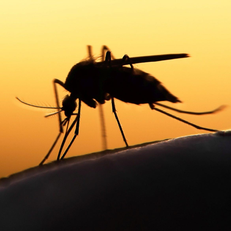 Jedes Jahr erkranken unzählige Menschen an Malaria. Laut des Malaria Berichts der WHO von 2020 waren es 2019 ca. 229 Millionen Malariafälle weltweit.