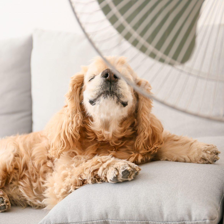 Hunde müssen bei großer Hitze genauso abgekühlt werden wie wir Menschen.