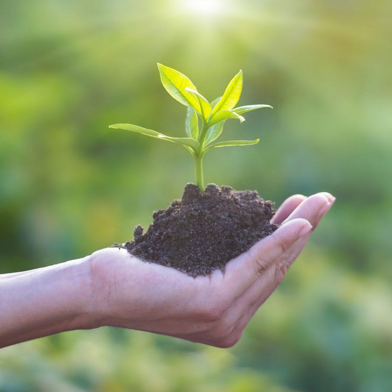 Zahlreiche Veranstaltungen und Workshops geben in der Nachhaltigkeitswoche alltagsorientierte Impulse für eine nachhaltige Lebensweise.